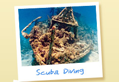 Picture - Barbados Scuba Diving